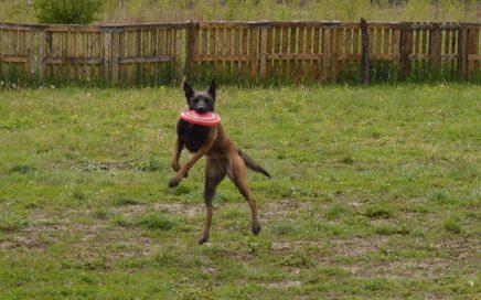 Alfa Canis K9 liga toss fetch